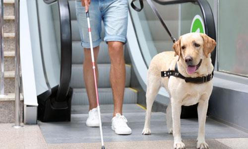 Accès des chiens guides : les préfets rappelés à la loi !