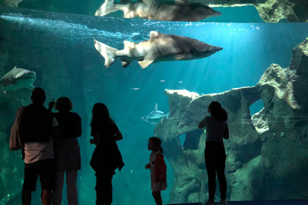 Aquarium La Rochelle: une immersion fascinante et accessible