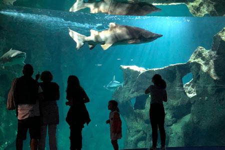 Aquarium La Rochelle: une immersion fascinante et accessible