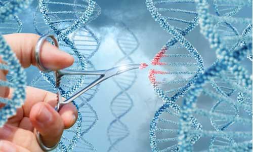 Drépanocytose : une thérapie génique prometteuse?